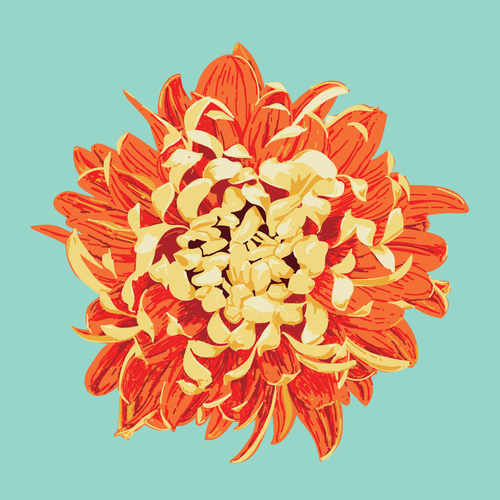 Chrysanthemum    •   Prints and pillows are available in my Society 6   shop  .