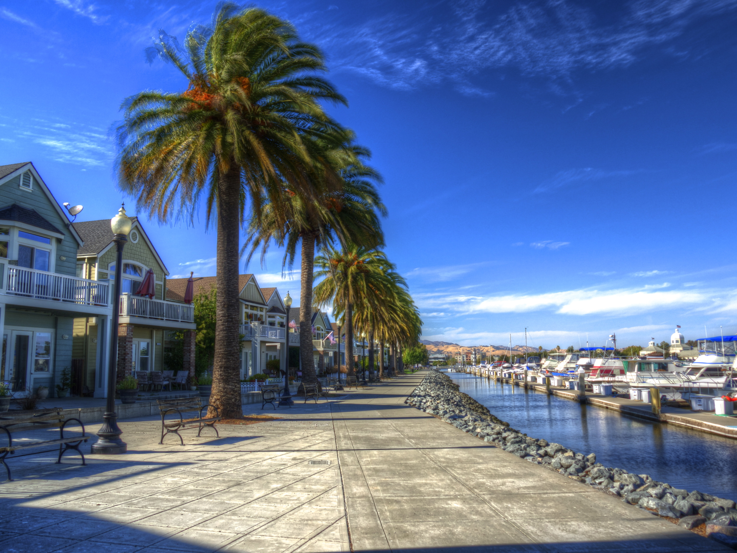 Palm Trees on the Suisun Waterfront