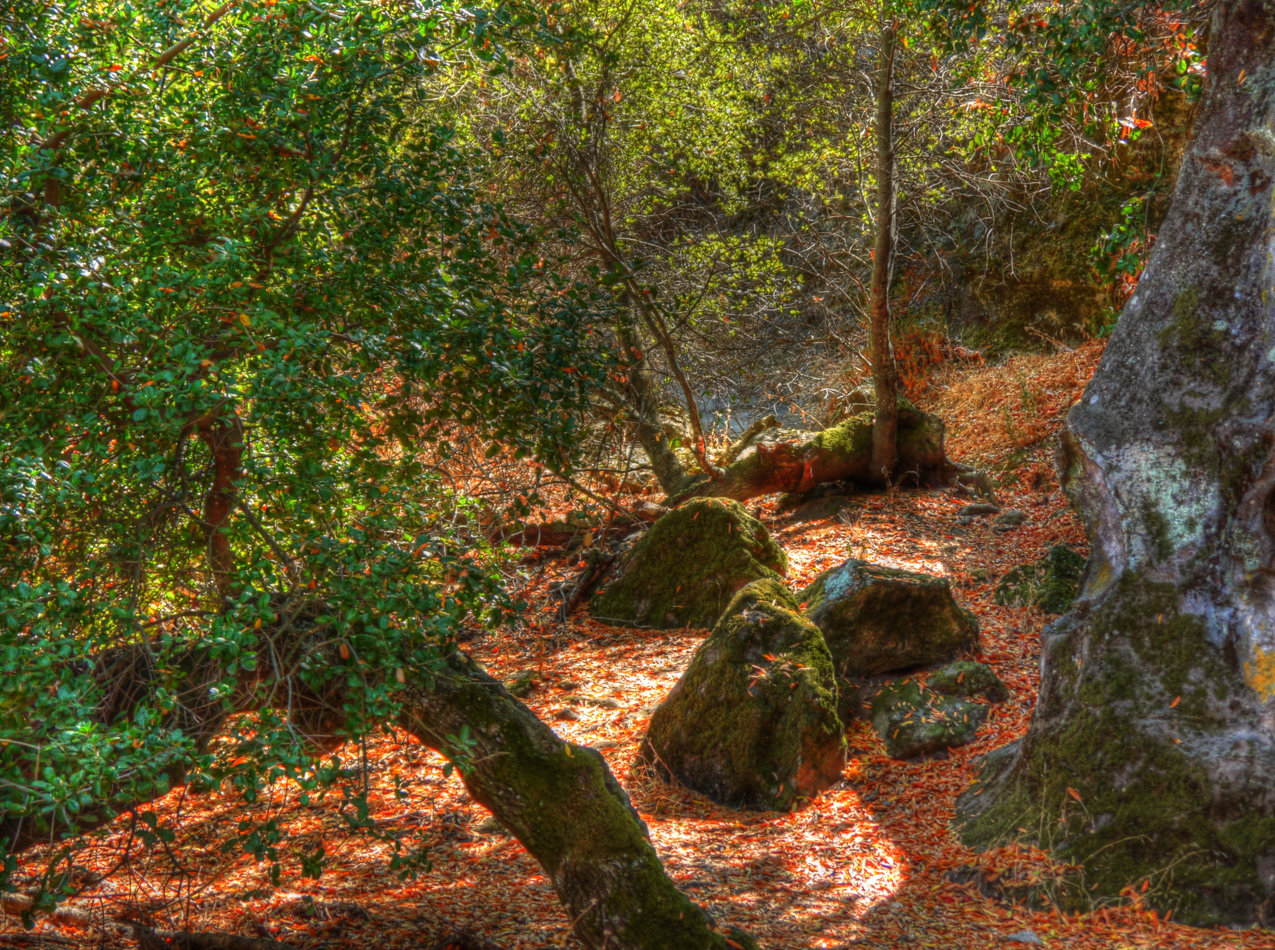 The Path Less Traveled is Carpeted In Red And Gold.