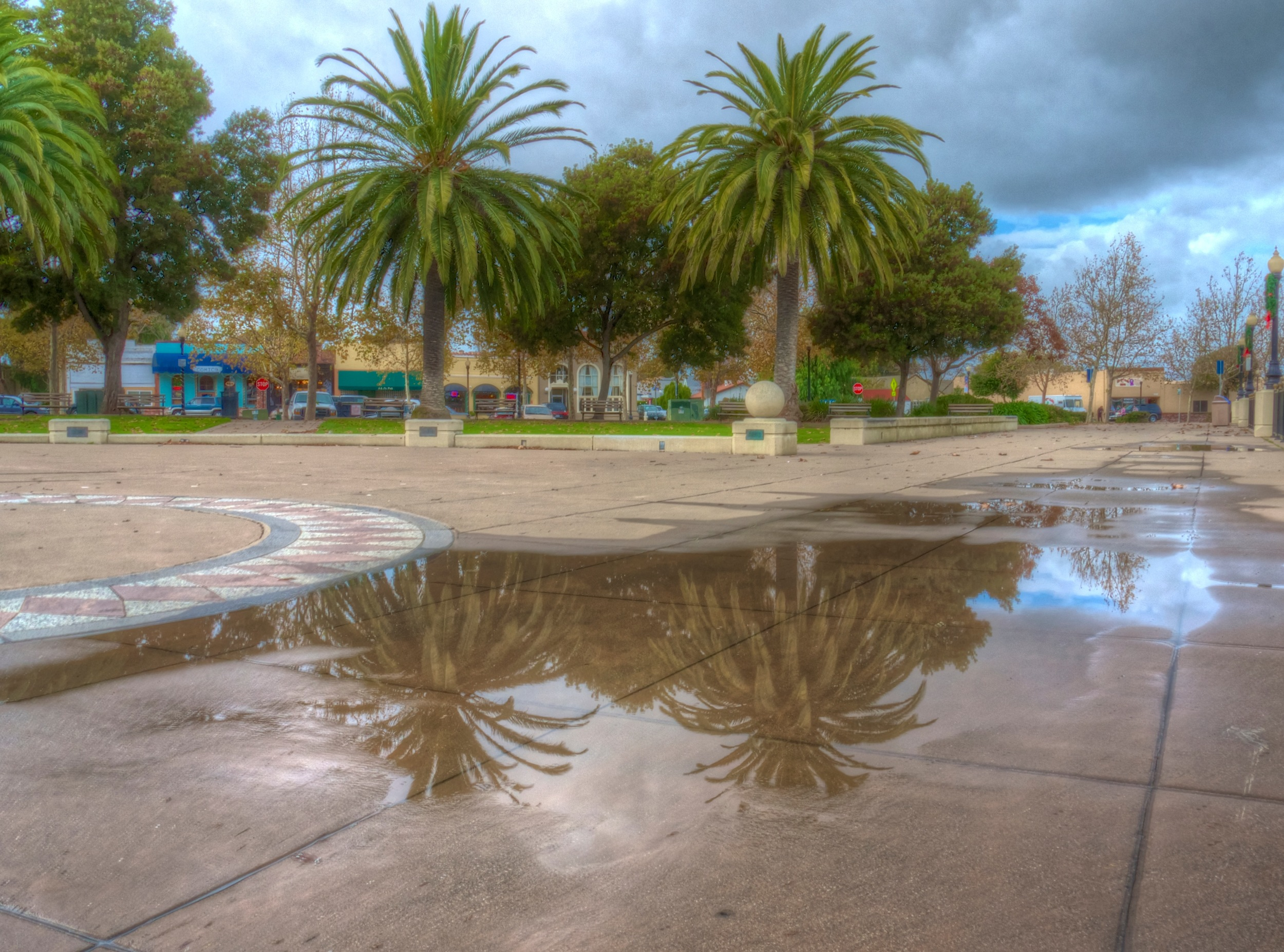 HDR photo of some lovely palm trees reflected by a puddle.