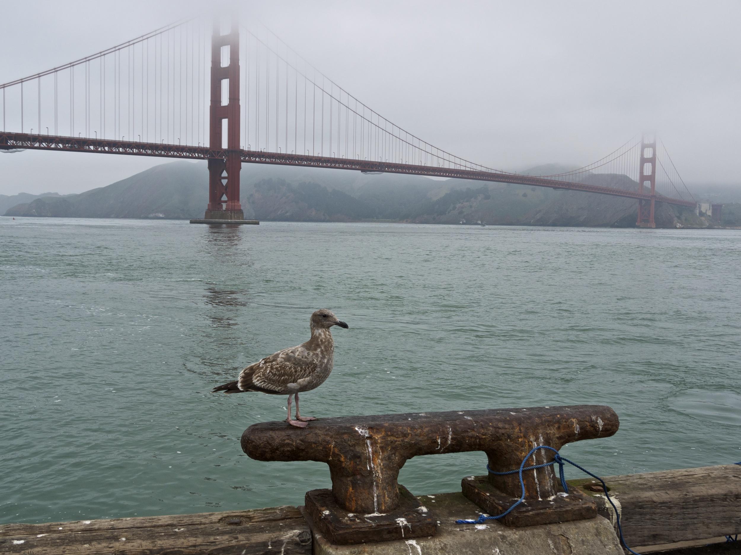 Golden Gate From Torpedo Wharf