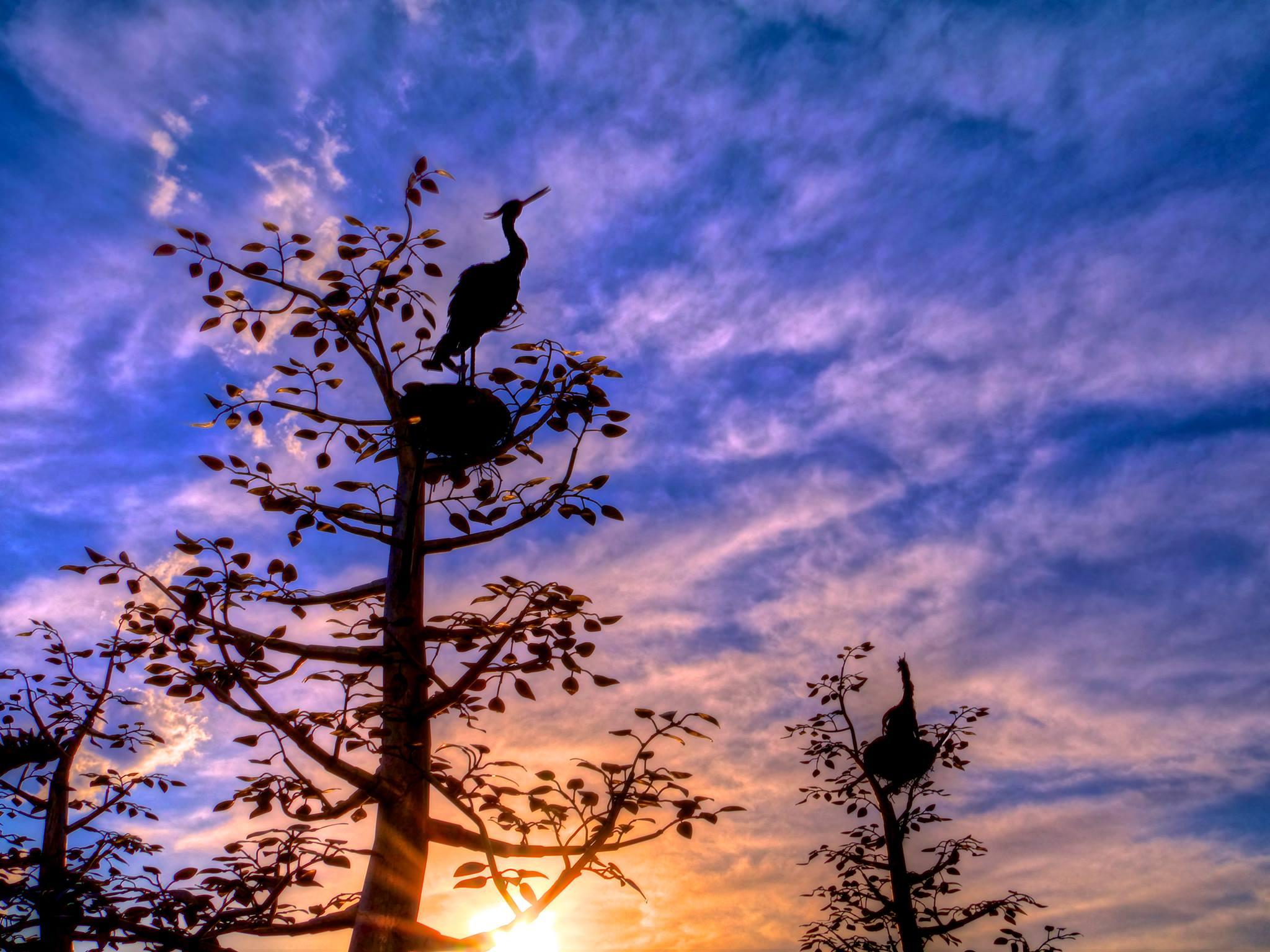 Herons, again.