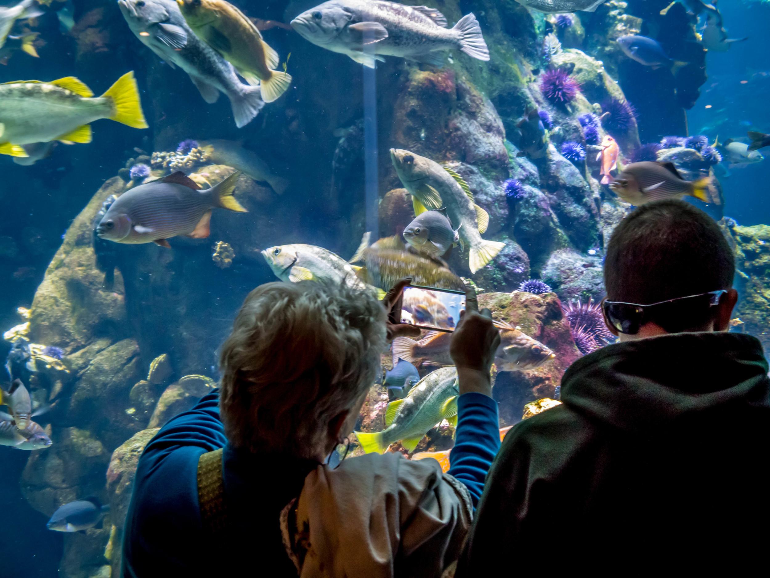 Huge plexiglass wall of the Steinhart Aquarium