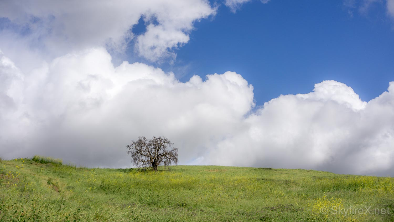 A tree on one of the many hills of Pena Adobe / Lagoon Valley Park