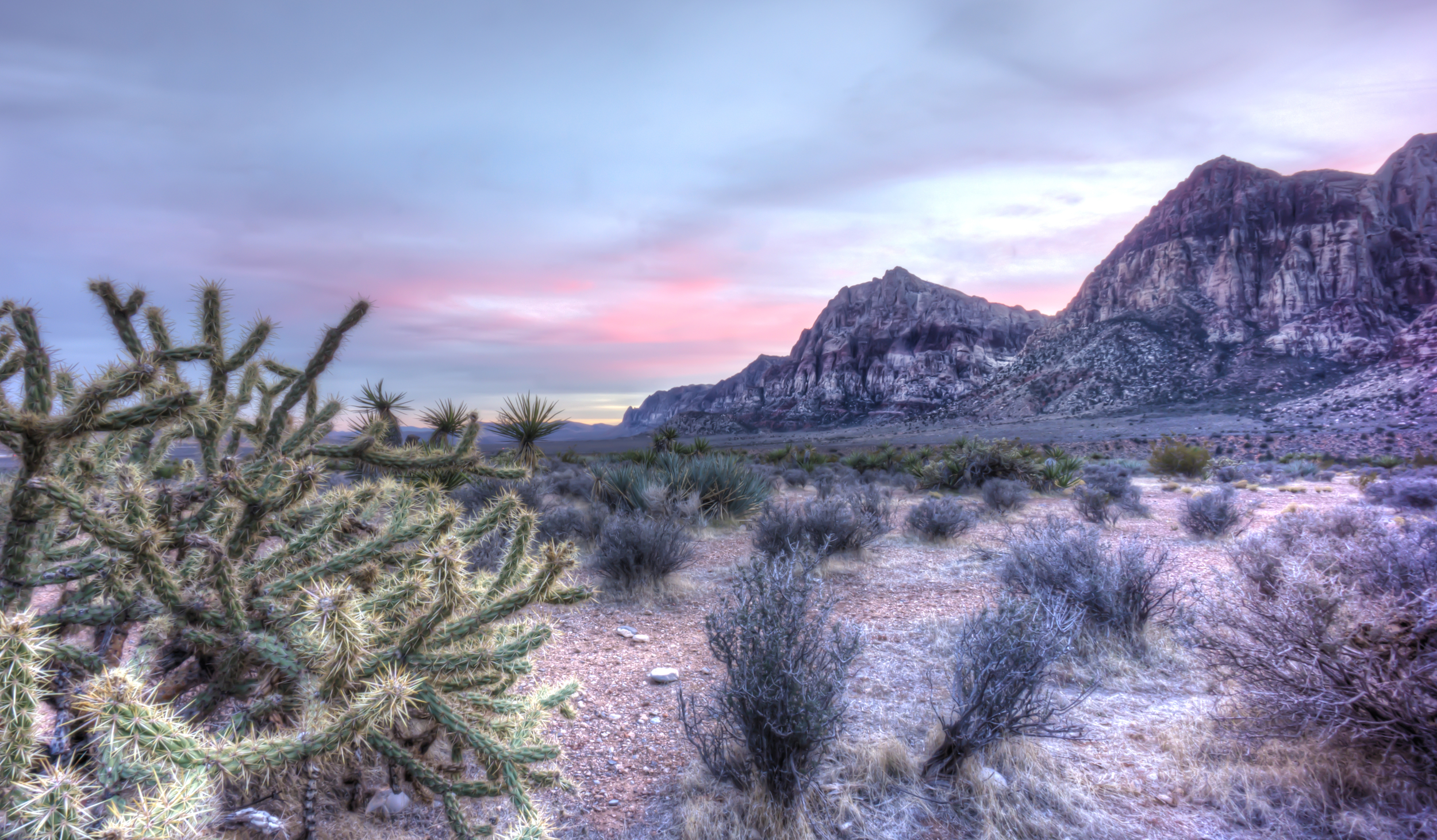 Cactus at Red Rock Canyon, Nevada