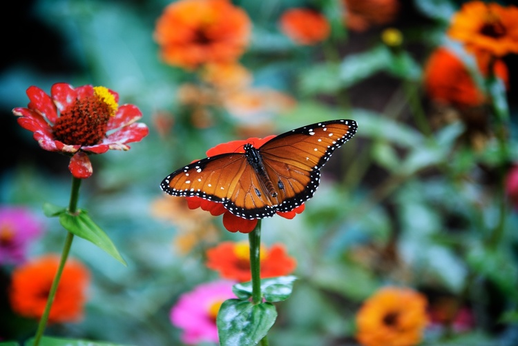 Image result for beautiful butterfly hd mobile