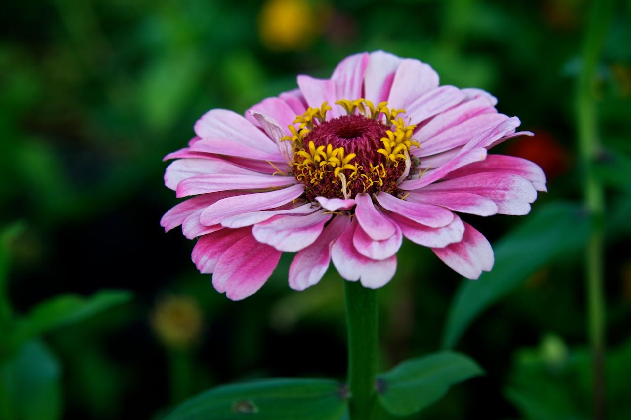 easterflower.jpg