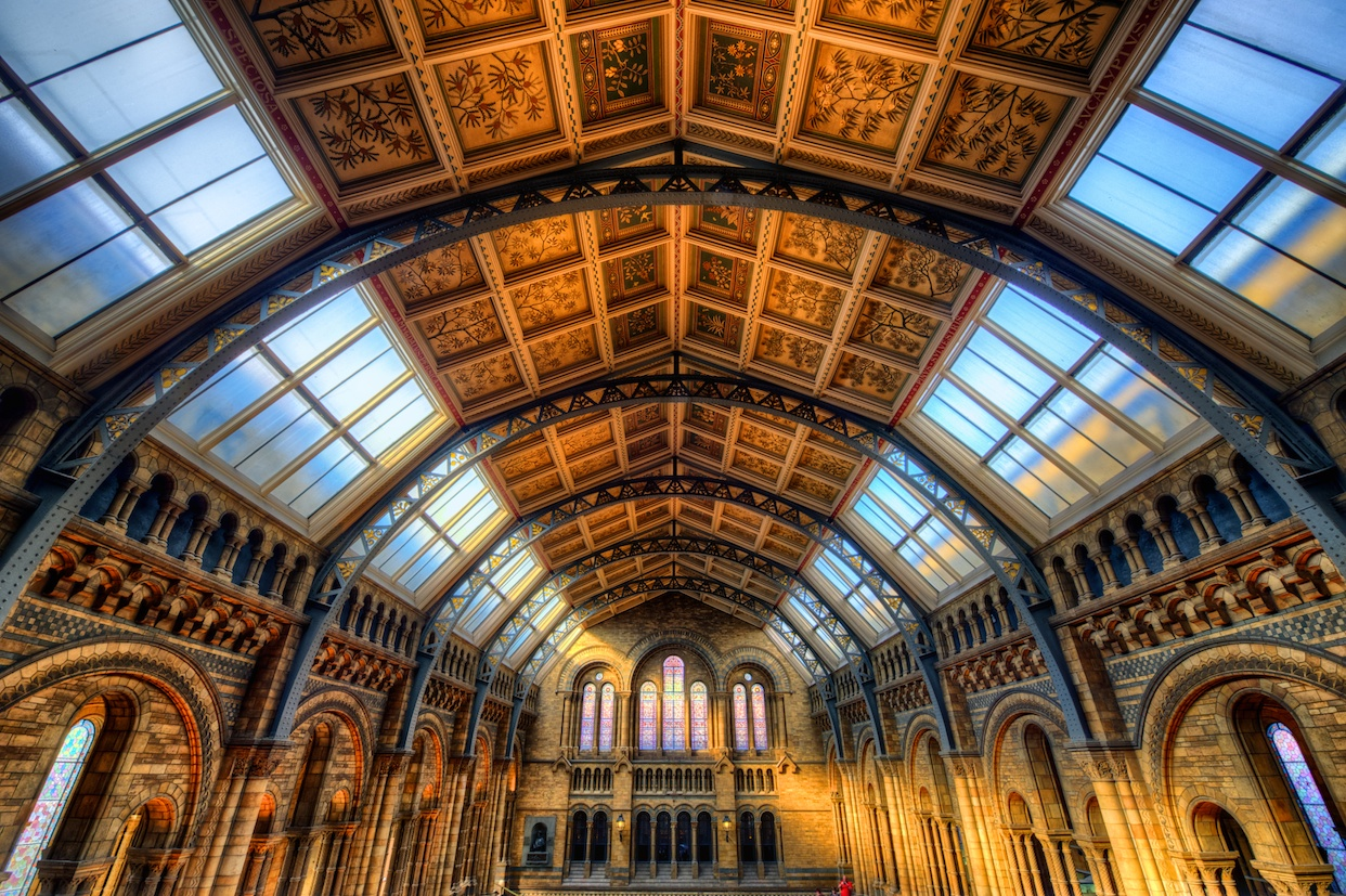 This is just the ceiling of the Natural History Museum - I just love this place!