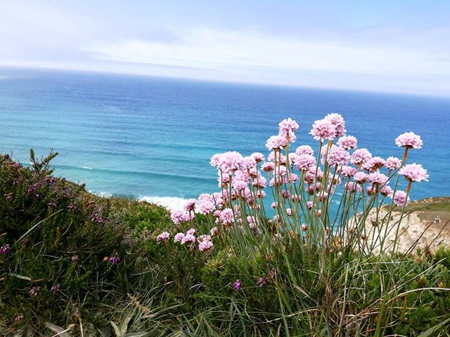 A quick snap on a lovely changeable day. #cornishweather #photographersincornwall #coastalpath #porthtowan #may #springtime #nature #photographyonthemove