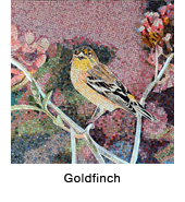 Goldfinch_mos.jpg