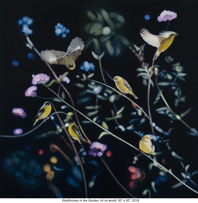 Gold Finches in Gard.jpg