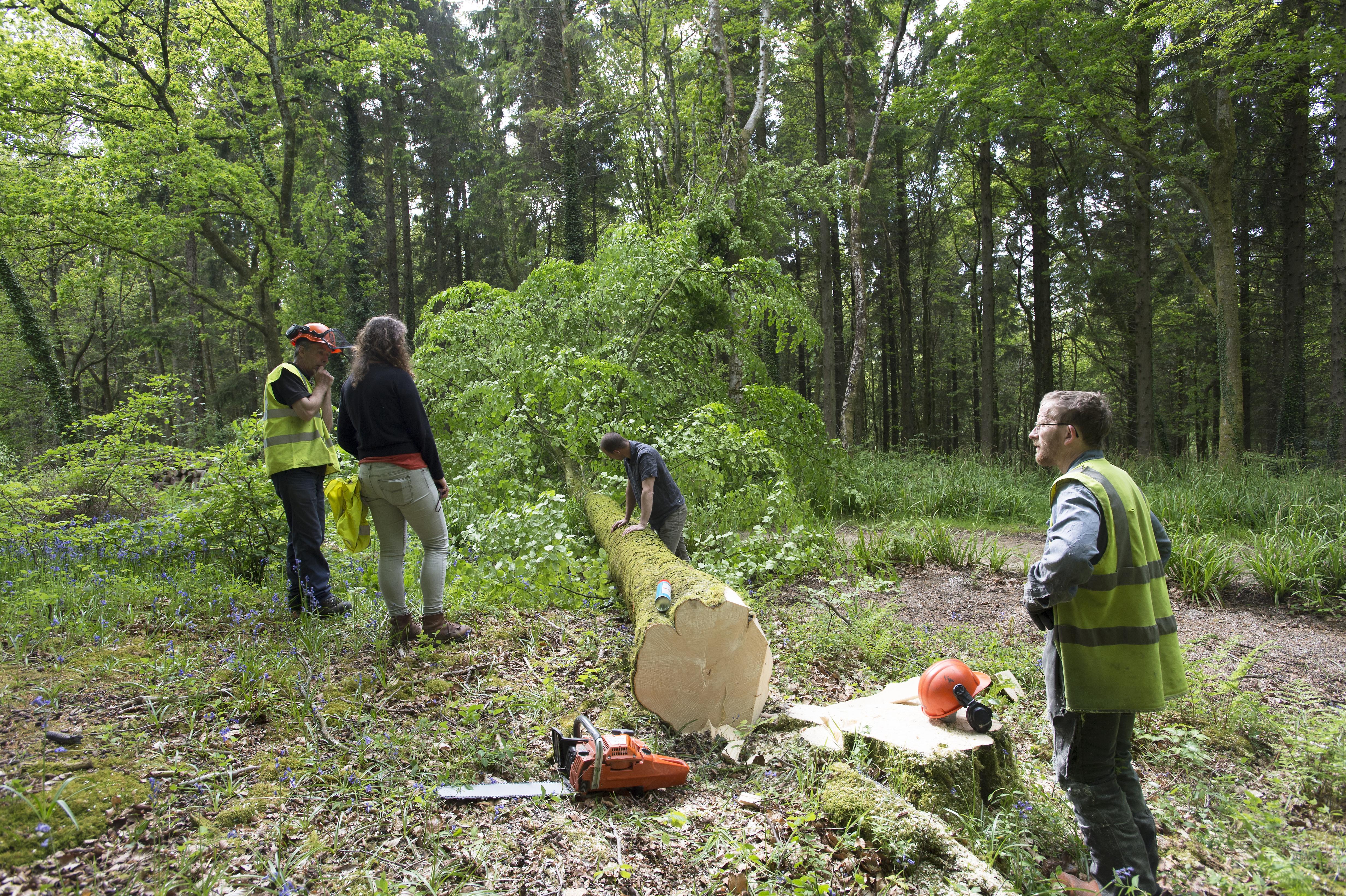 Hooke_Park_Design_&_Make_Timber_Seasoning_Shelter_Group_choosing_&_measuring_trees_VB_2013_06_03_0019.JPG