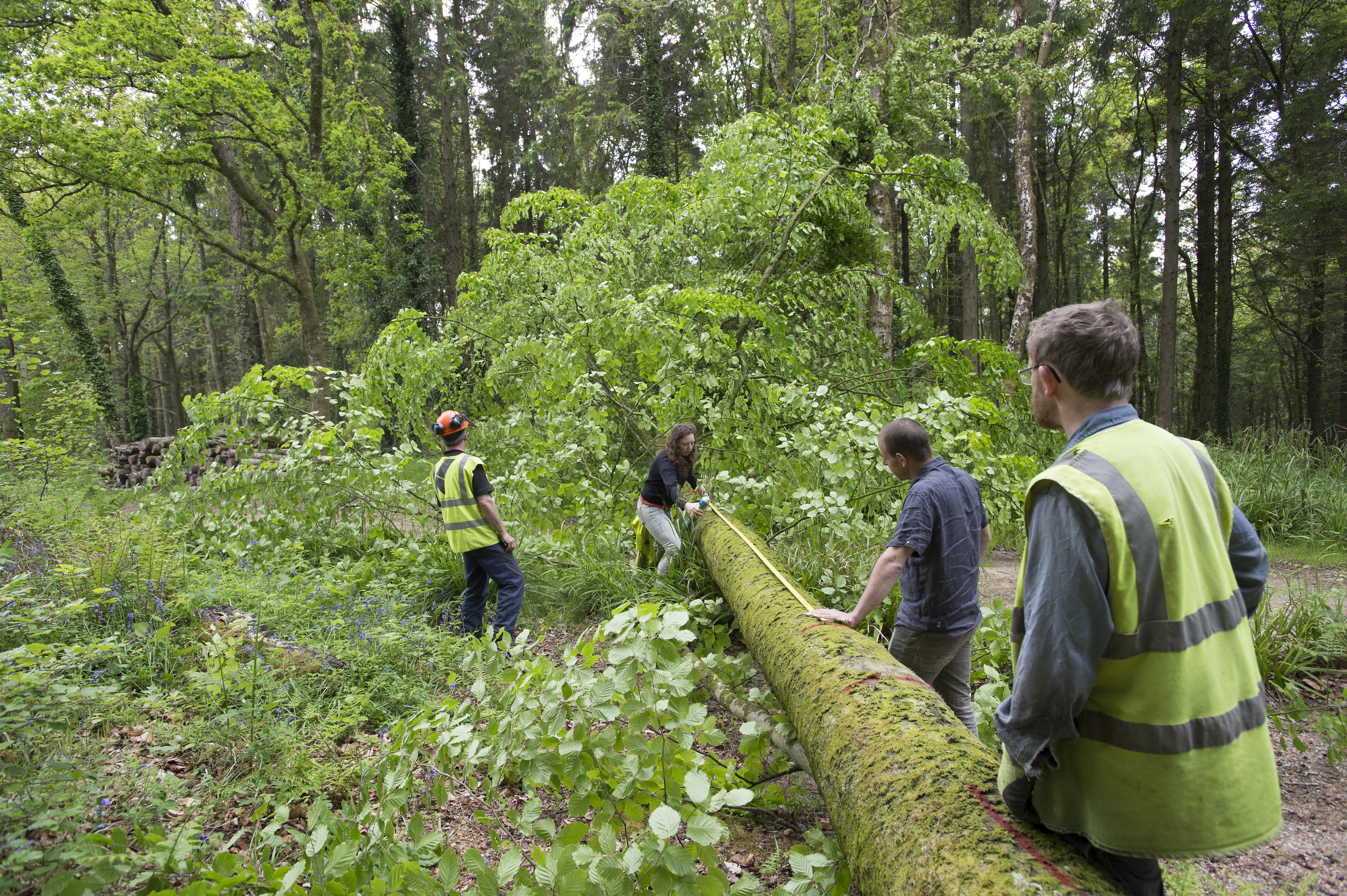 Hooke_Park_Design_&_Make_Timber_Seasoning_Shelter_Group_choosing_&_measuring_trees_VB_2013_06_03_0020.JPG