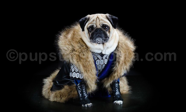 pugs of middle earth 9.png