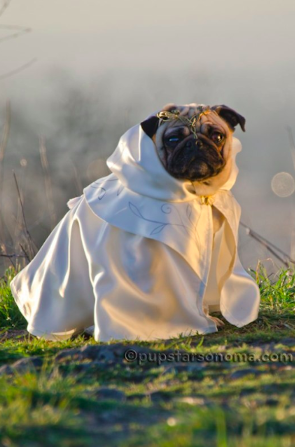 pugs of middle earth 5.png