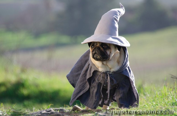 pugs of middle earth 3.png