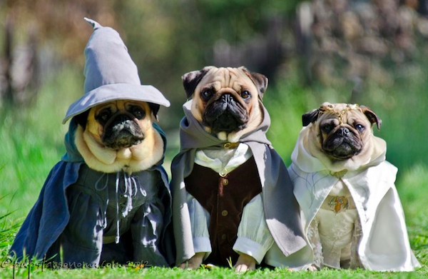 pugs of middle earth 2.png
