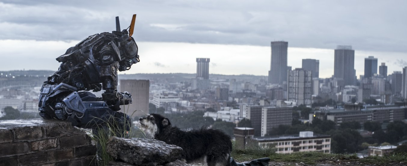Even Chappie likes puppies...sniff sniff, sob