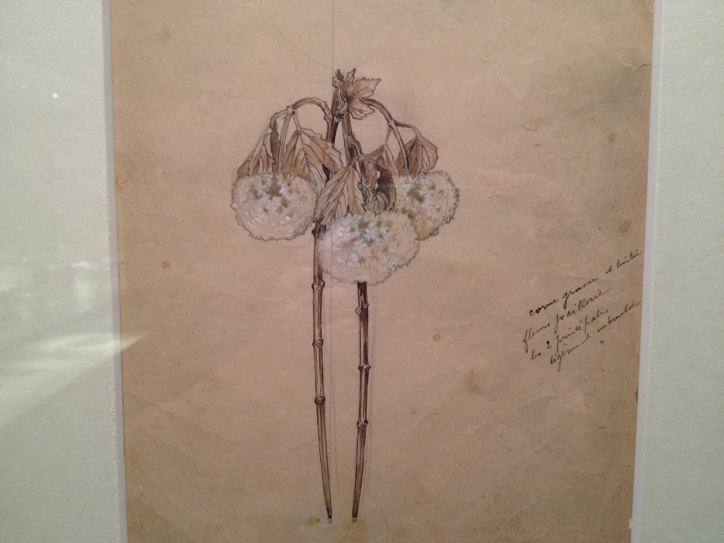 "Rene Lalique Drawing for ""Hydrangeas"" hair grip Undated India ink and watercolor on paper"