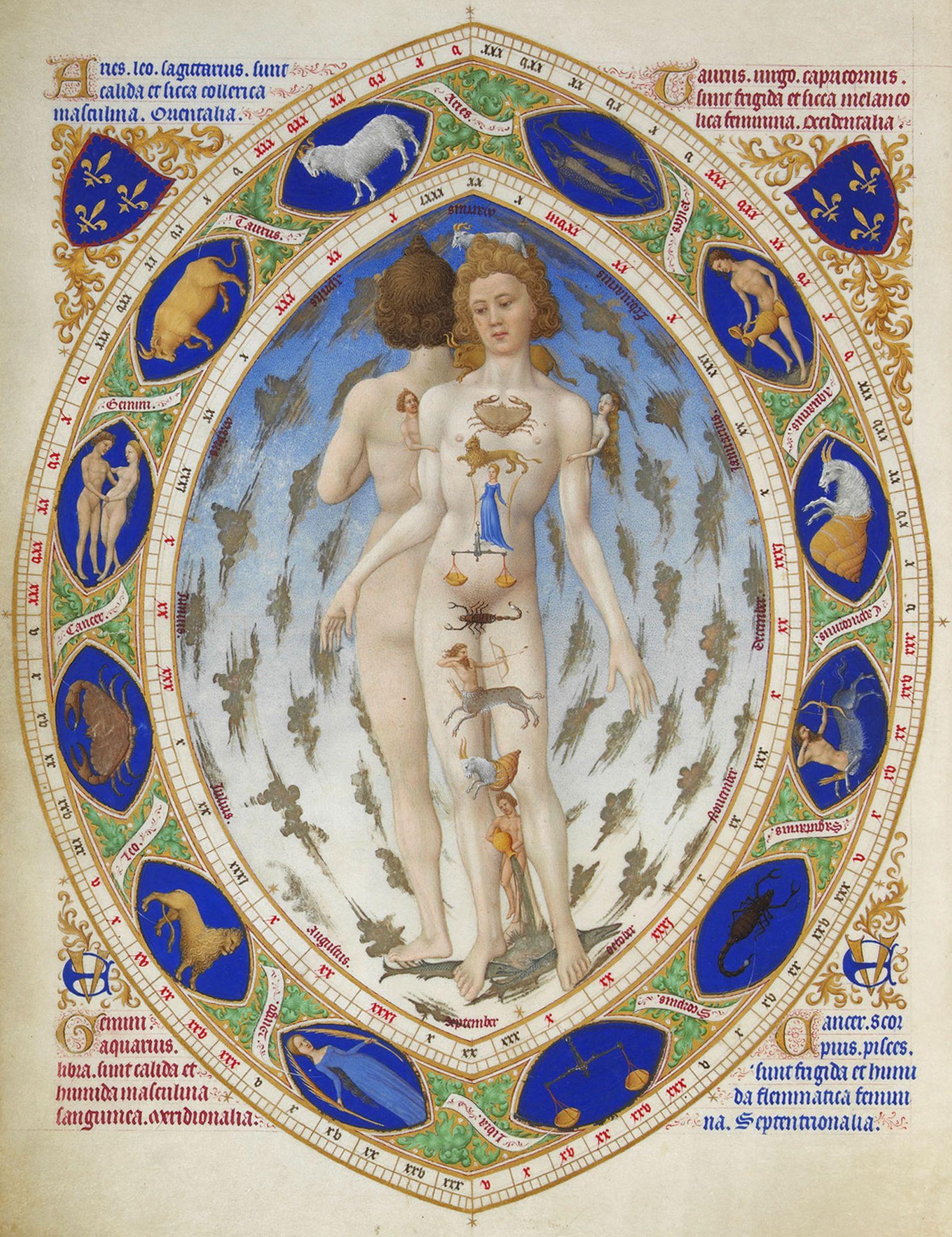 Homo Signorum Anatomical Man