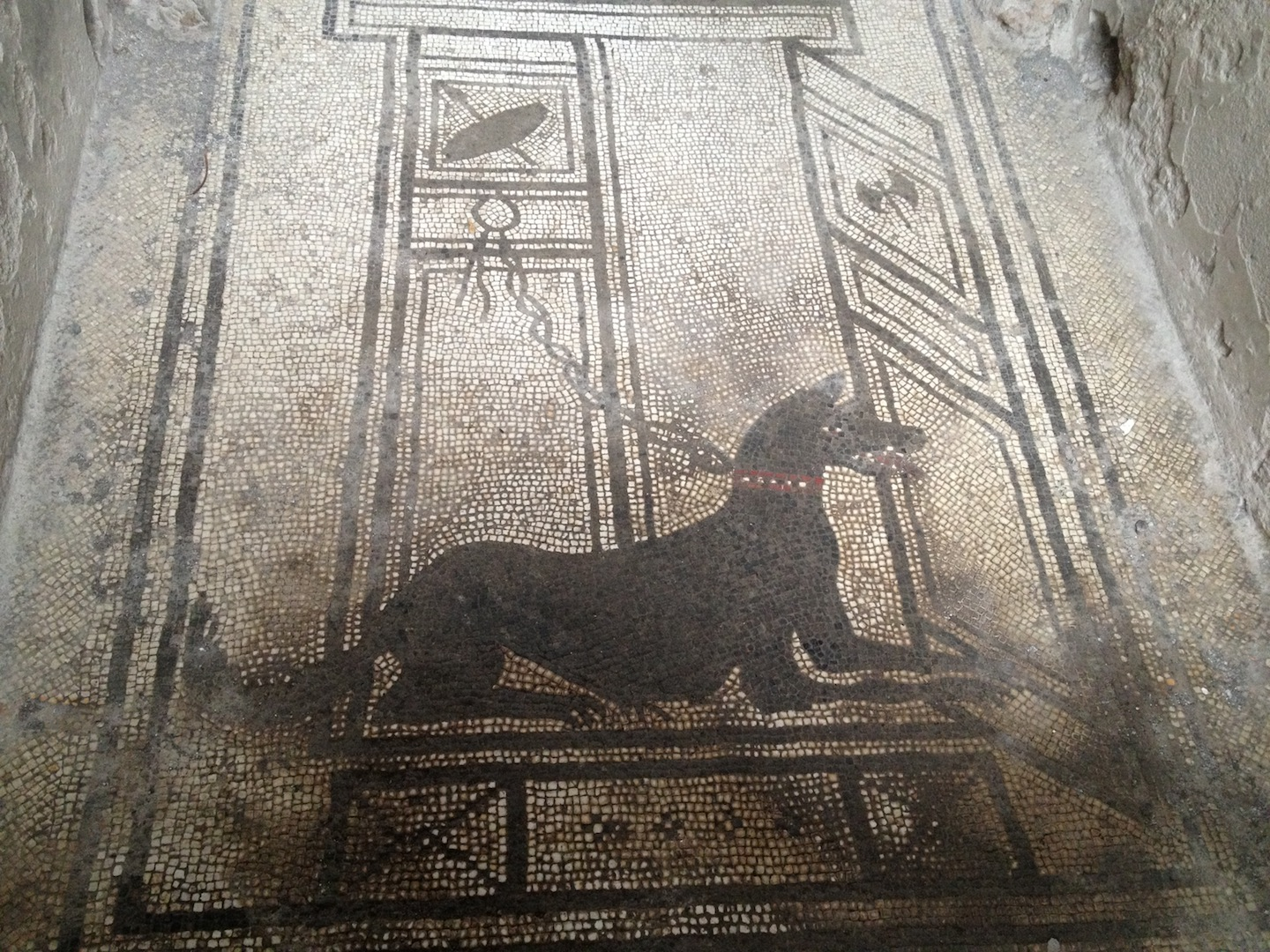 Pompeii-Iconography-jessewaugh.com-32-Dog.jpg