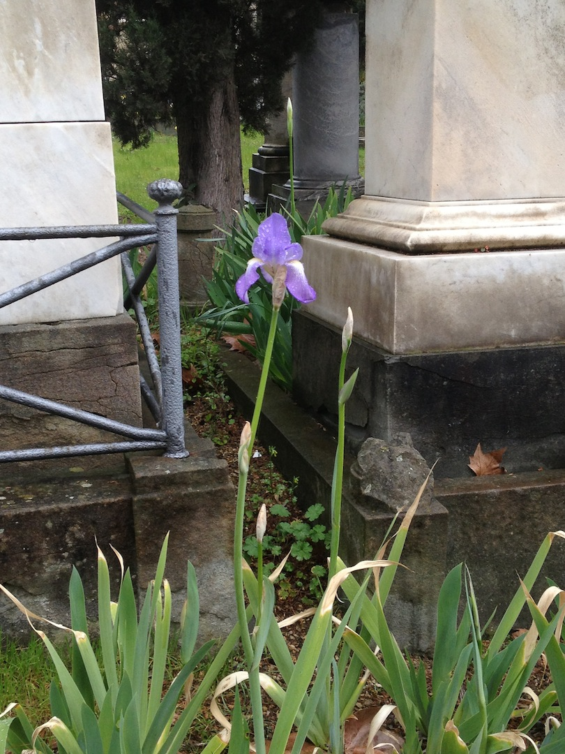 English-Cemetery-Florence-Cimitero-Inglese-Firenze-jessewaugh.com-72.jpg