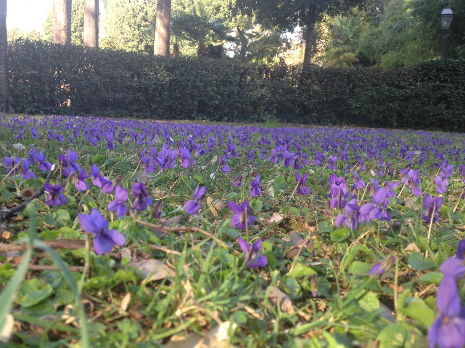 TORRIGIANI-GARDENS-FLOWERS-jessewaugh.com-4.jpg
