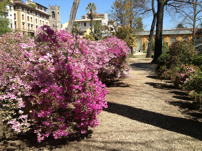 Worlds-Oldest-Botanical-Garden-Firenze-Florence-Italy-jessewaugh.com-32.jpg