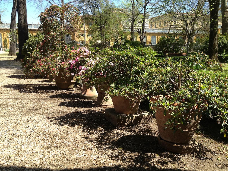 Worlds-Oldest-Botanical-Garden-Firenze-Florence-Italy-jessewaugh.com-34.jpg
