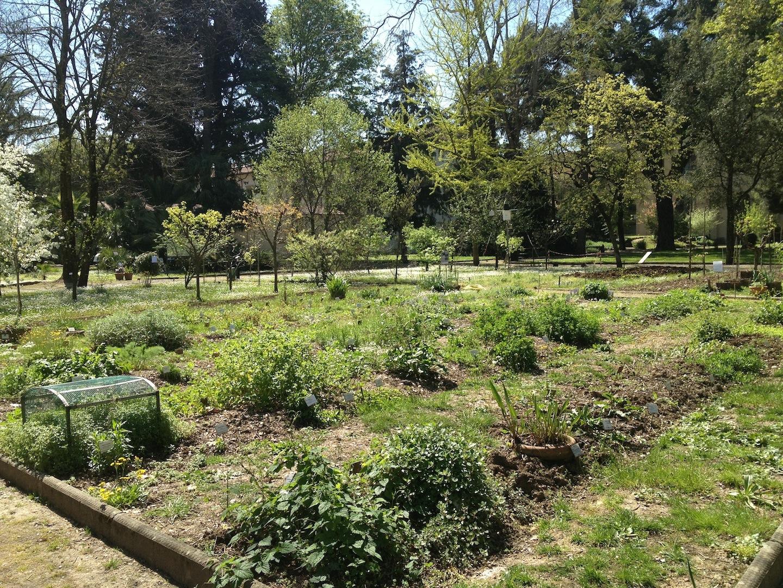 Worlds-Oldest-Botanical-Garden-Firenze-Florence-Italy-jessewaugh.com-1.jpg
