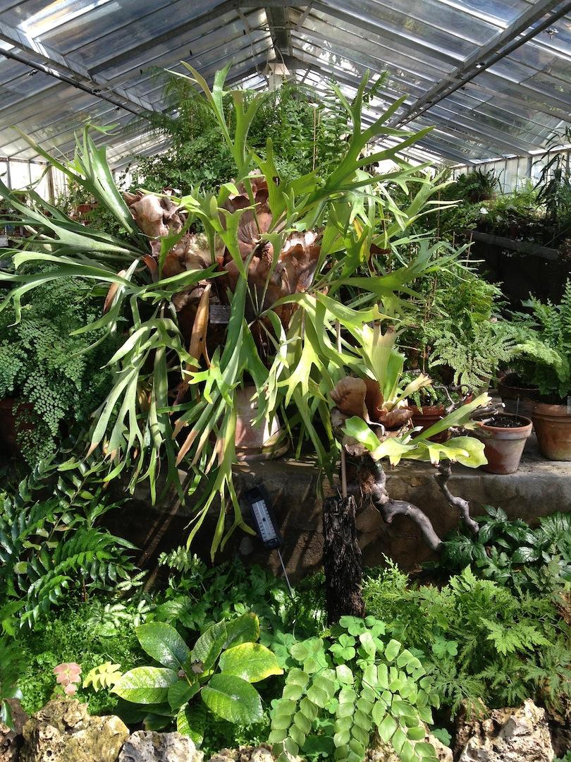 Worlds-Oldest-Botanical-Garden-Firenze-Florence-Italy-jessewaugh.com-3.jpg