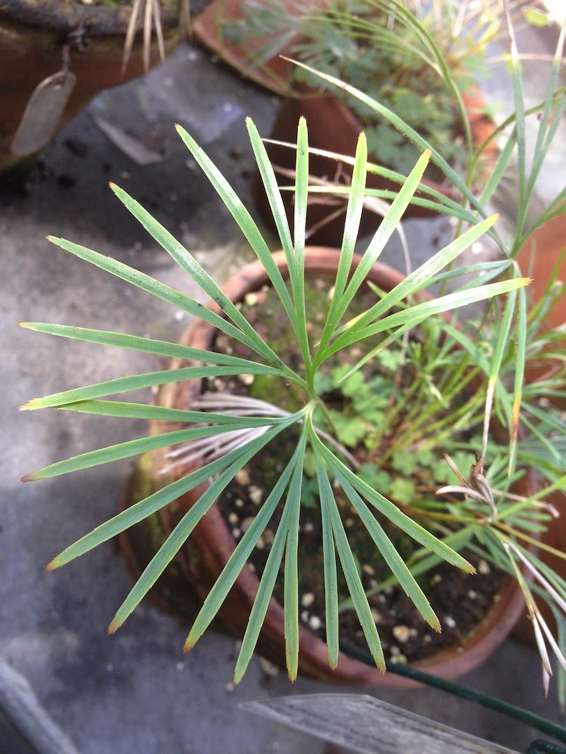 Worlds-Oldest-Botanical-Garden-Firenze-Florence-Italy-jessewaugh.com-4.jpg