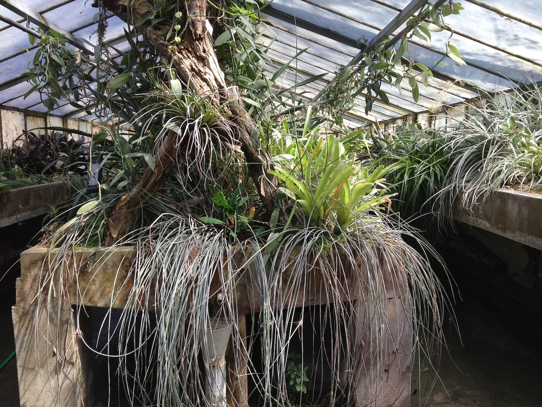 Worlds-Oldest-Botanical-Garden-Firenze-Florence-Italy-jessewaugh.com-6.jpg