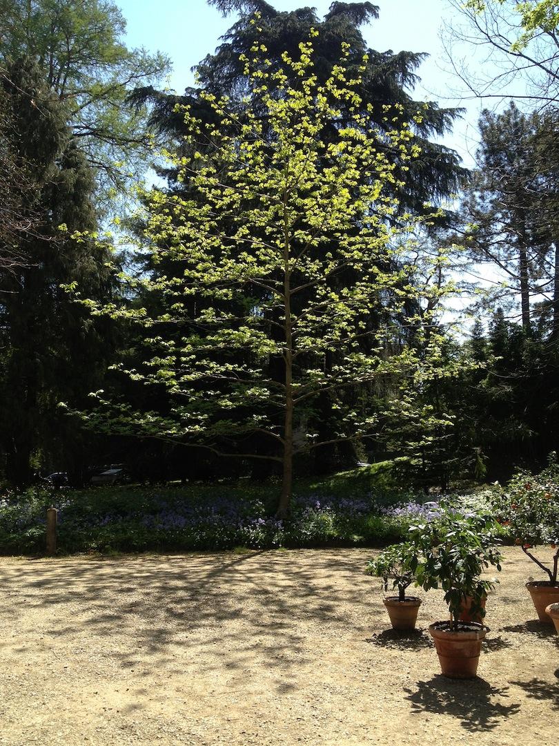 Worlds-Oldest-Botanical-Garden-Firenze-Florence-Italy-jessewaugh.com-7.jpg