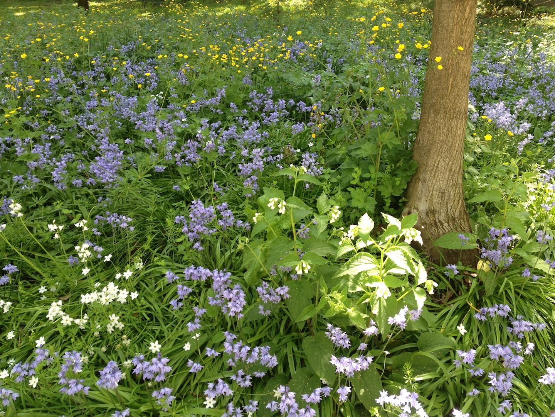Worlds-Oldest-Botanical-Garden-Firenze-Florence-Italy-jessewaugh.com-8.jpg