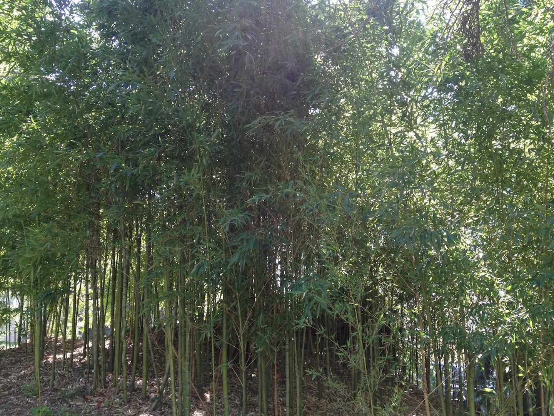 Worlds-Oldest-Botanical-Garden-Firenze-Florence-Italy-jessewaugh.com-9.jpg