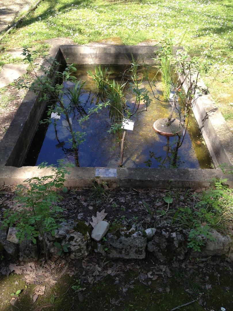 Worlds-Oldest-Botanical-Garden-Firenze-Florence-Italy-jessewaugh.com-11.jpg