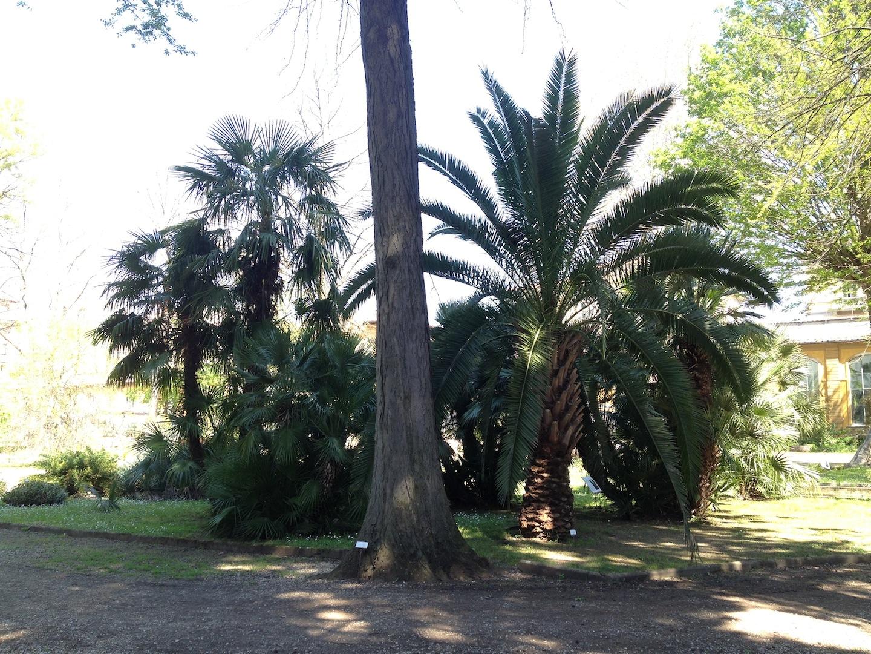 Worlds-Oldest-Botanical-Garden-Firenze-Florence-Italy-jessewaugh.com-16.jpg
