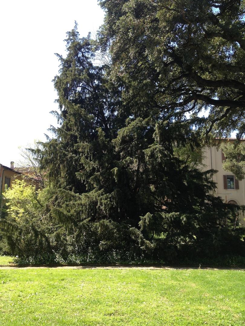 Worlds-Oldest-Botanical-Garden-Firenze-Florence-Italy-jessewaugh.com-17.jpg