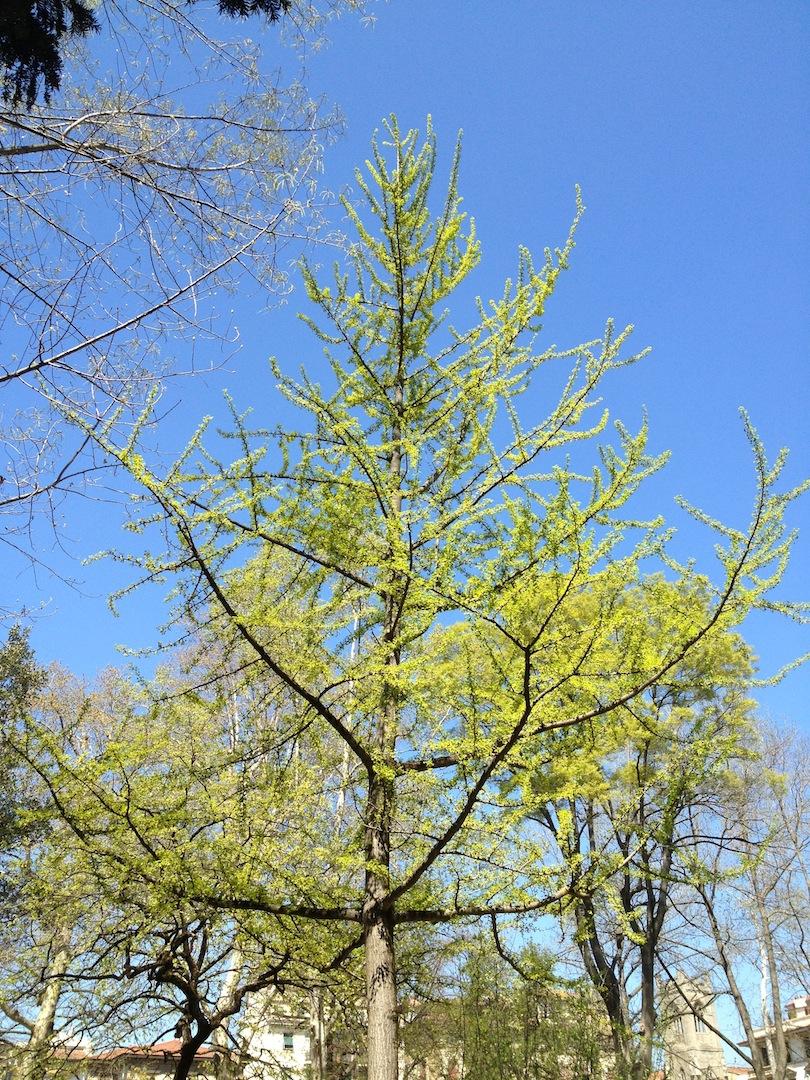 Worlds-Oldest-Botanical-Garden-Firenze-Florence-Italy-jessewaugh.com-18.jpg