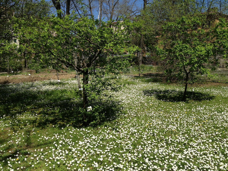 Worlds-Oldest-Botanical-Garden-Firenze-Florence-Italy-jessewaugh.com-19.jpg