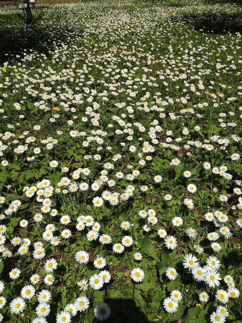 Worlds-Oldest-Botanical-Garden-Firenze-Florence-Italy-jessewaugh.com-20.jpg