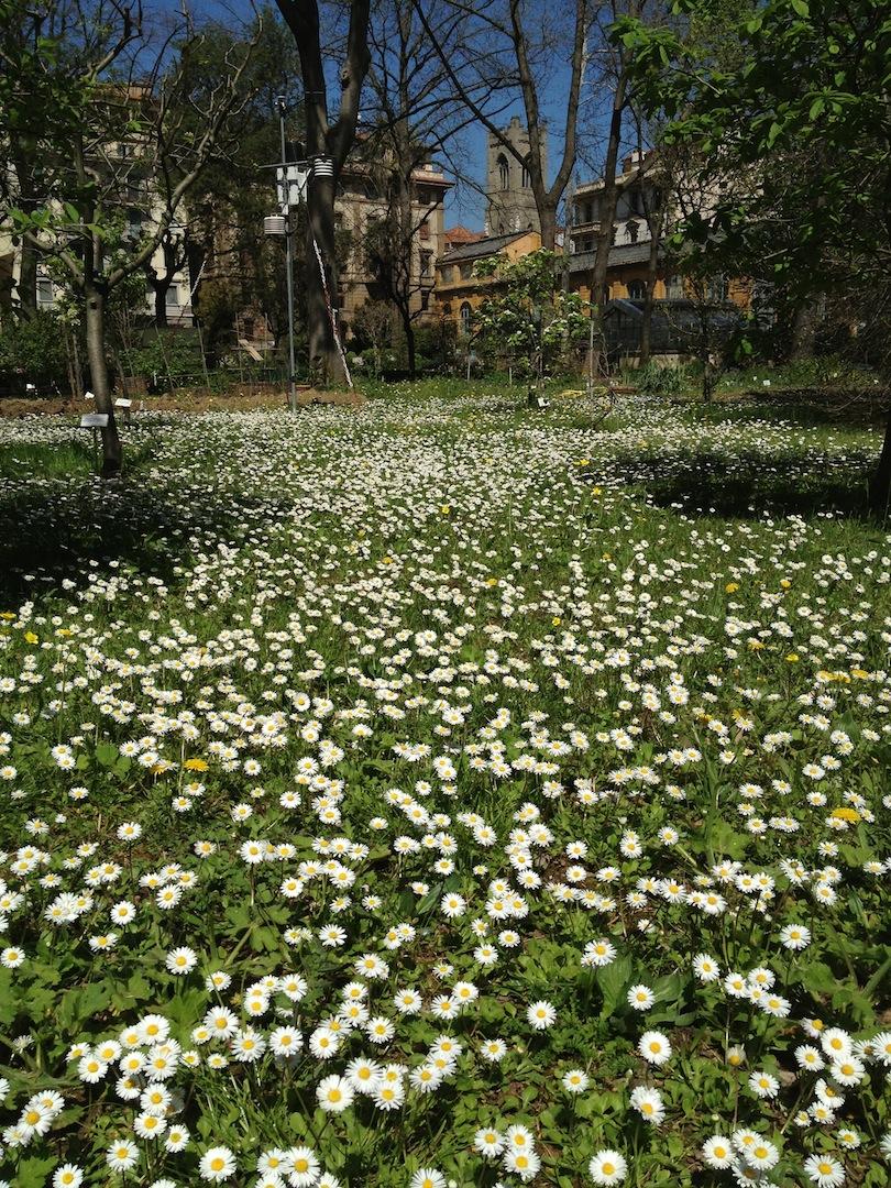 Worlds-Oldest-Botanical-Garden-Firenze-Florence-Italy-jessewaugh.com-21.jpg