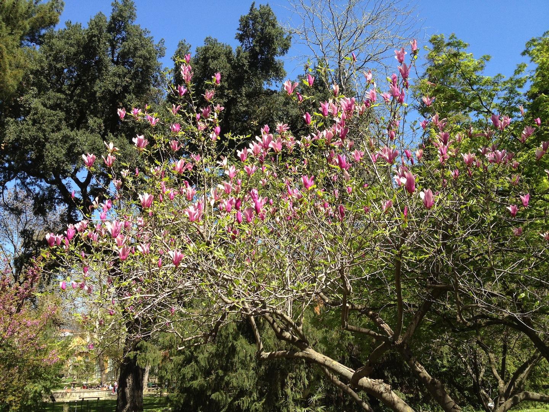 Worlds-Oldest-Botanical-Garden-Firenze-Florence-Italy-jessewaugh.com-22.jpg
