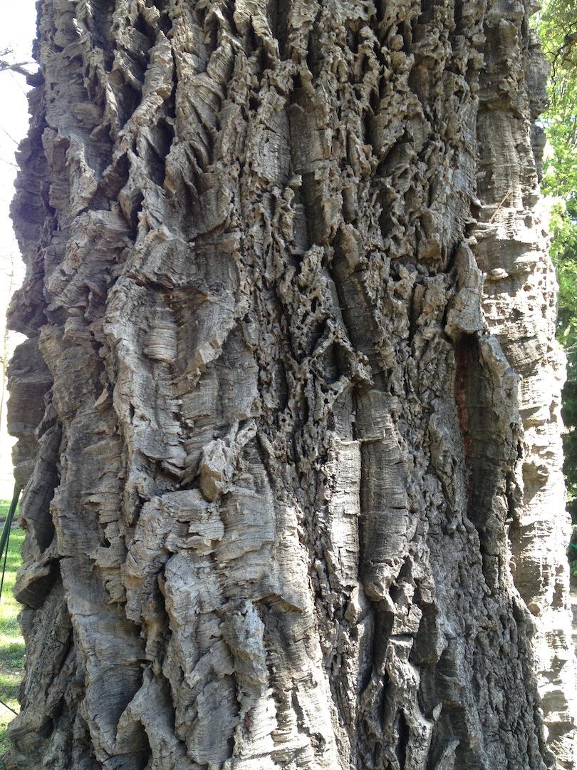 Worlds-Oldest-Botanical-Garden-Firenze-Florence-Italy-jessewaugh.com-25.jpg