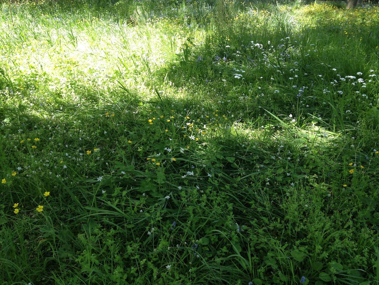 Worlds-Oldest-Botanical-Garden-Firenze-Florence-Italy-jessewaugh.com-30.jpg