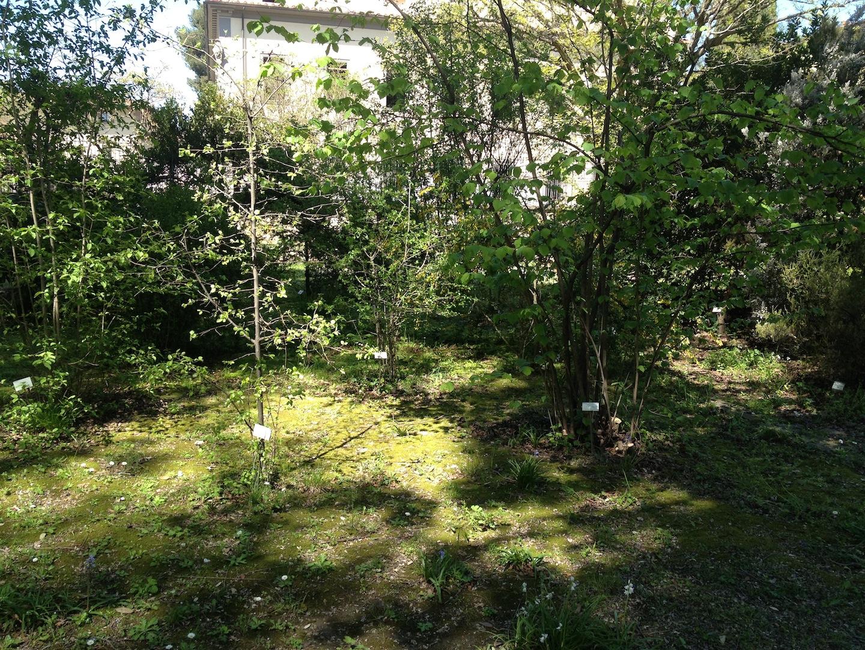 Worlds-Oldest-Botanical-Garden-Firenze-Florence-Italy-jessewaugh.com-31.jpg