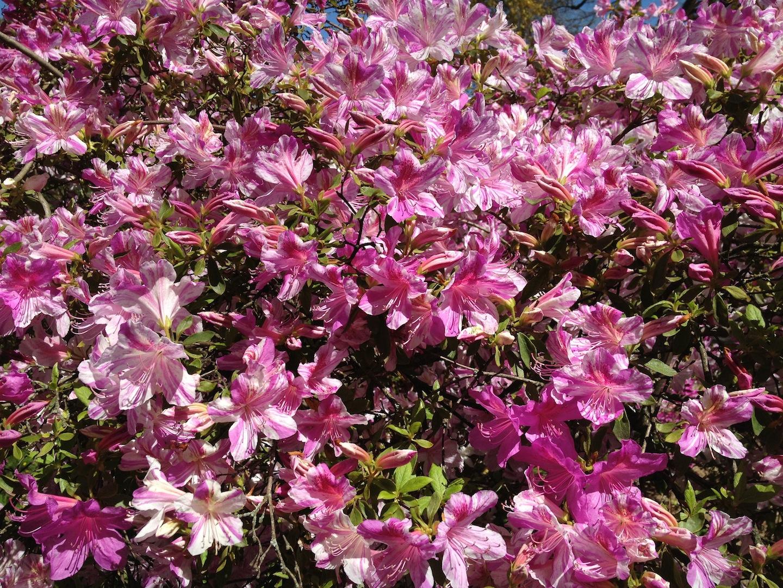 Worlds-Oldest-Botanical-Garden-Firenze-Florence-Italy-jessewaugh.com-33.jpg