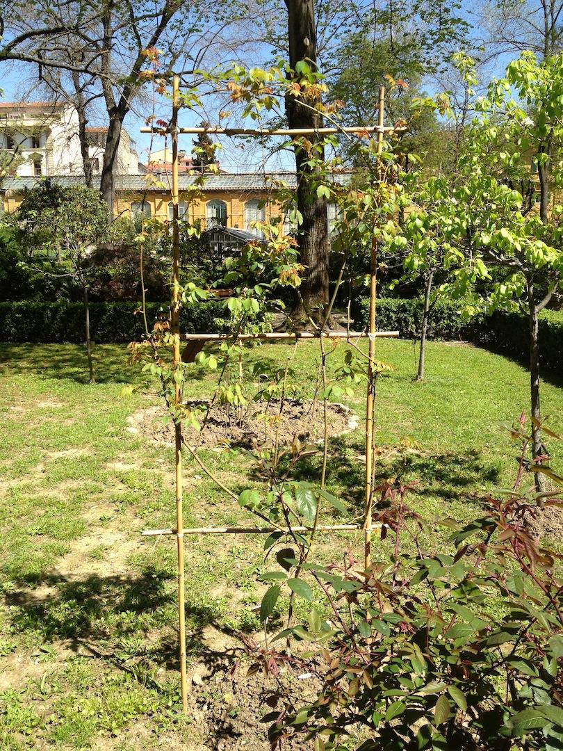 Worlds-Oldest-Botanical-Garden-Firenze-Florence-Italy-jessewaugh.com-35.jpg