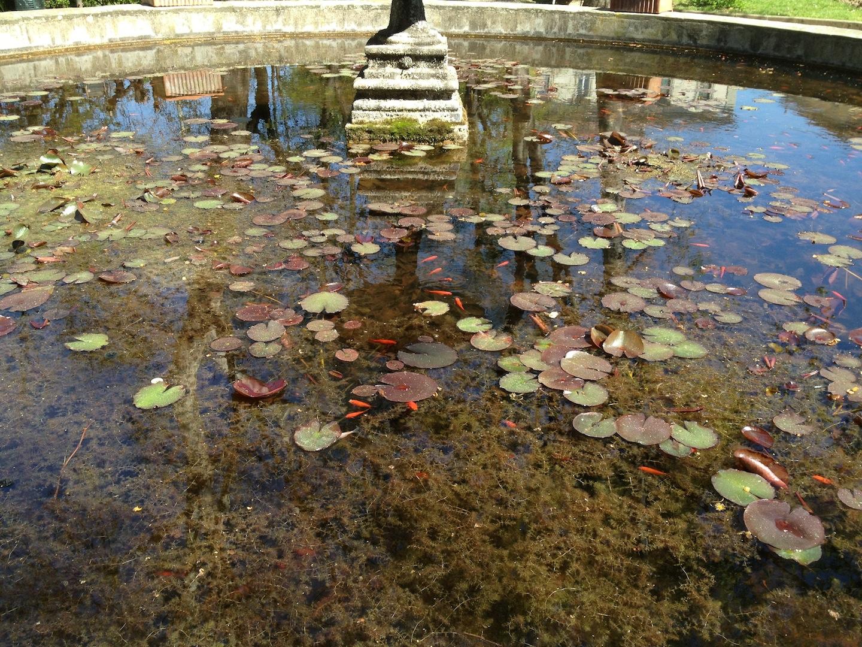 Worlds-Oldest-Botanical-Garden-Firenze-Florence-Italy-jessewaugh.com-37.jpg